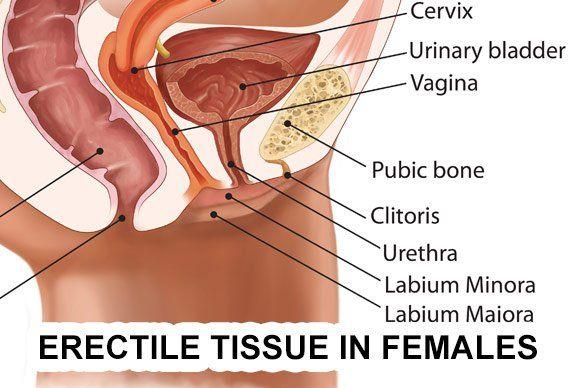 Erotic Pictures Shaved genitals pics